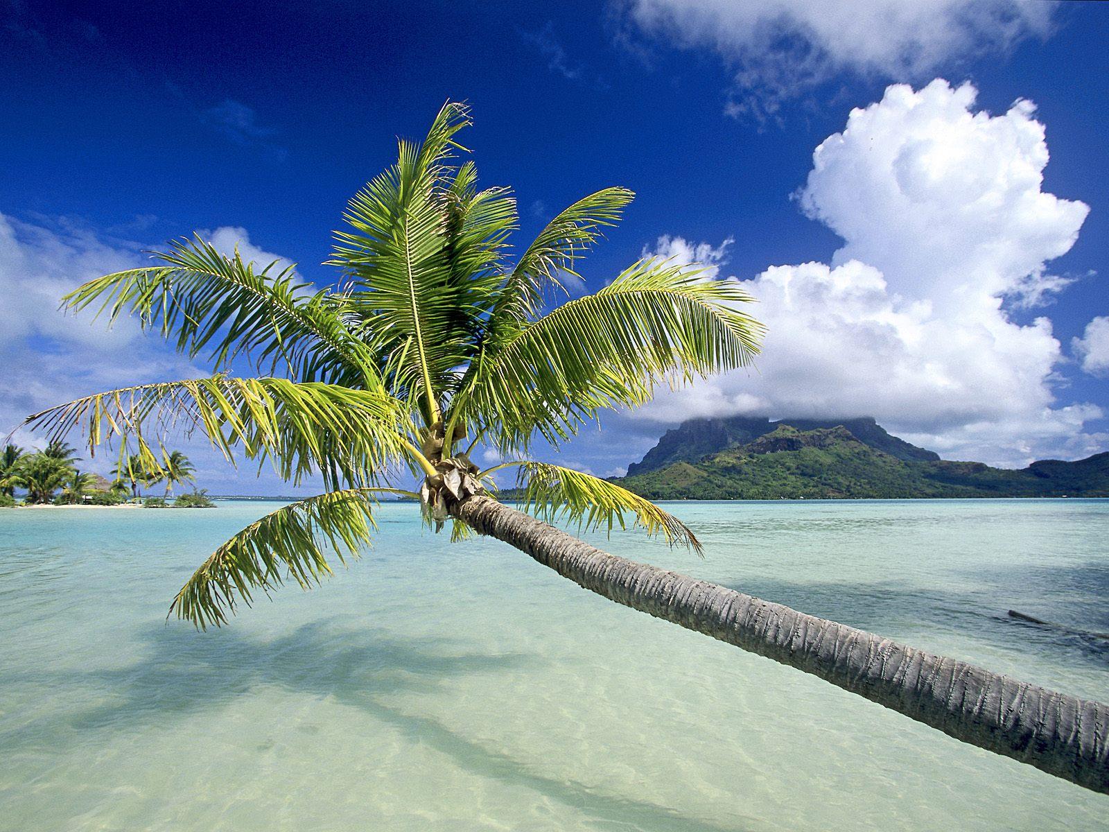Fondos de pantalla Tropicales