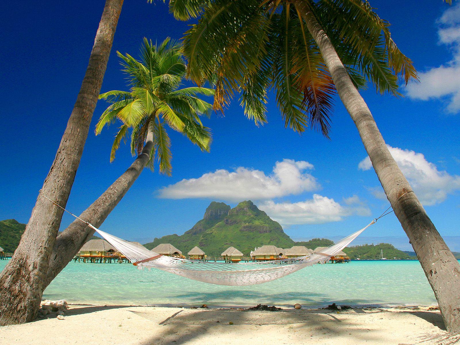 Fondo paraíso tropical