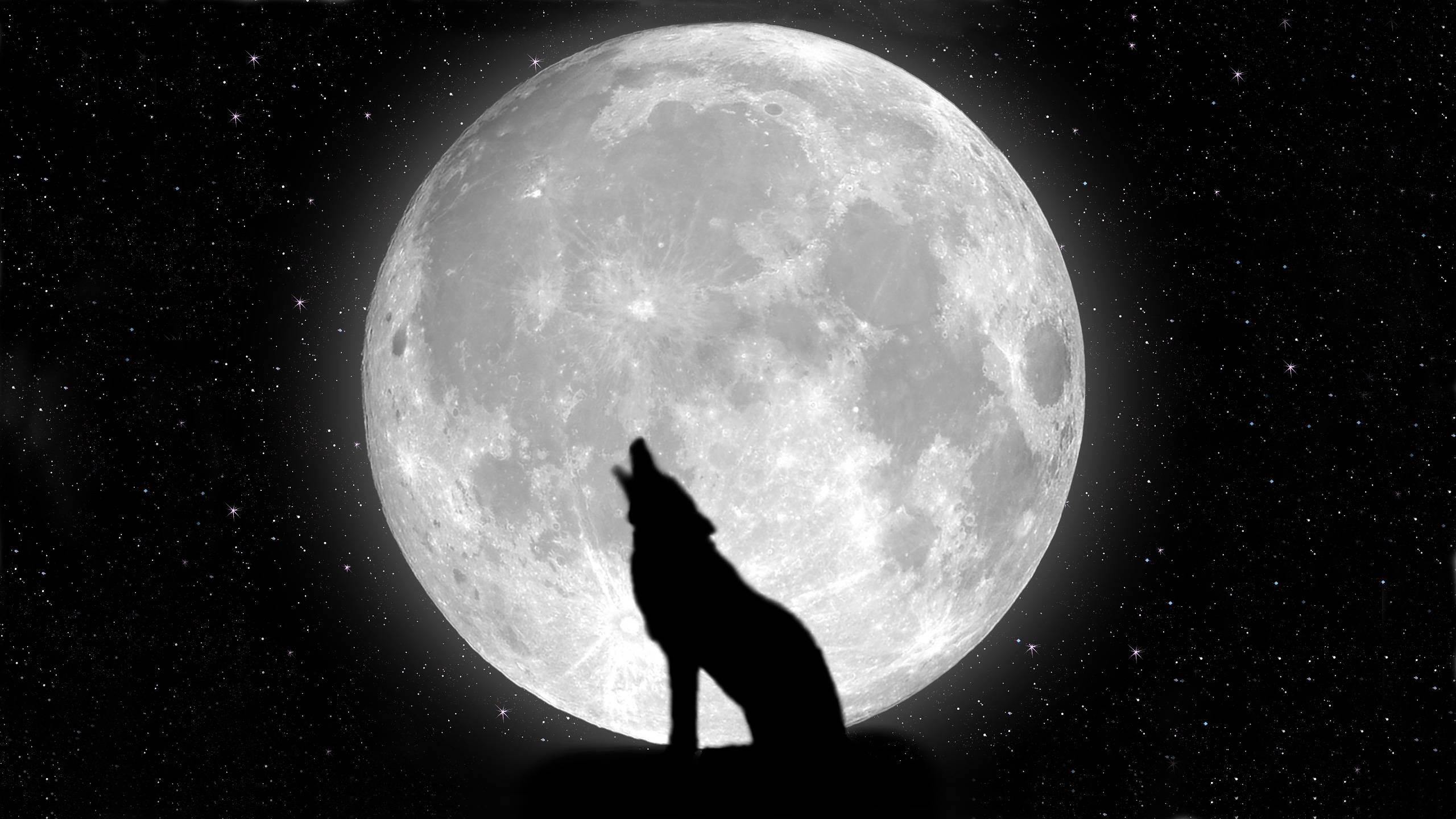 Lobo Aúllando: Lobo Aullando A La Luna Walpaper