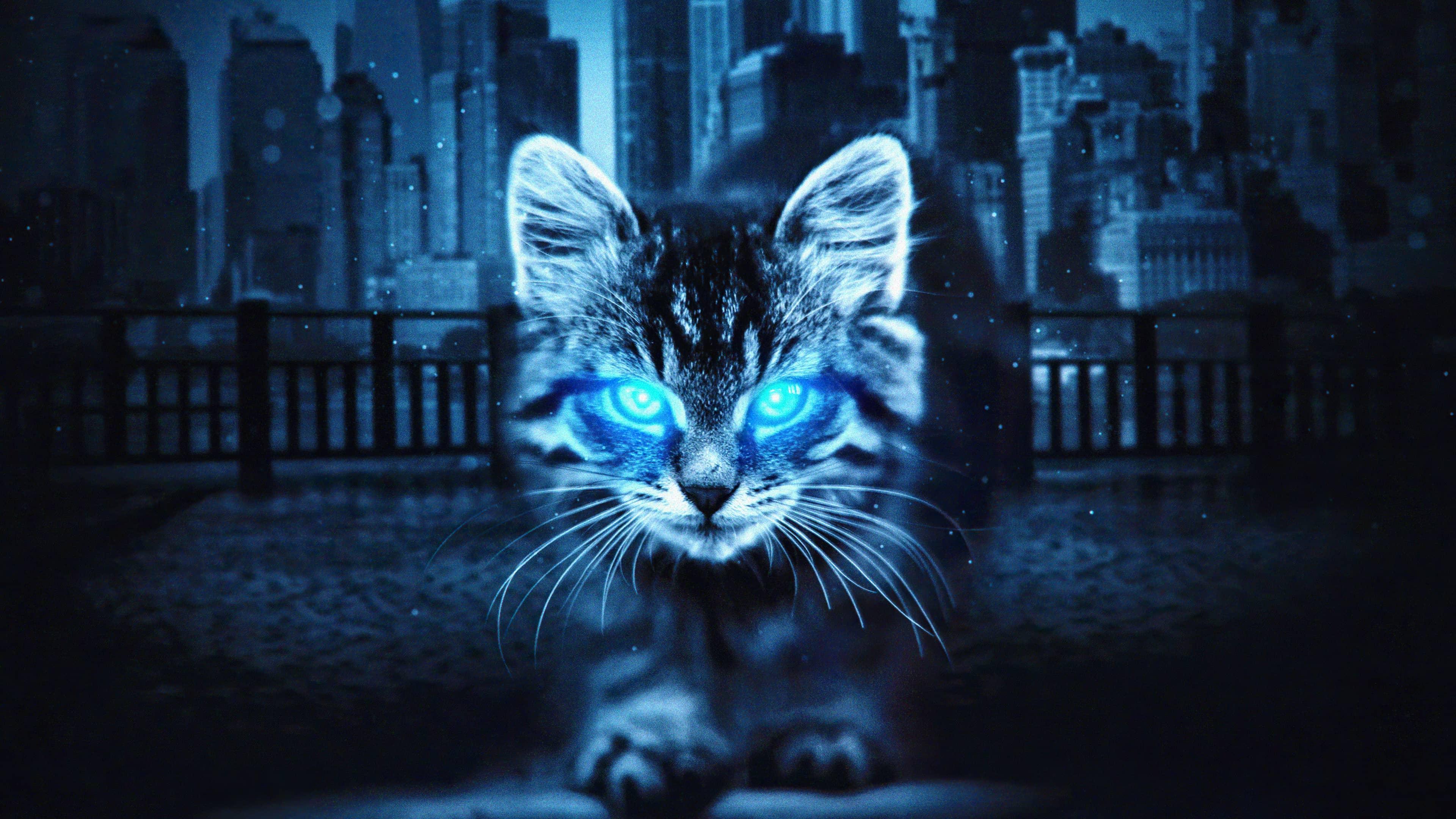 Wallpaper gatito en la oscuridad con ojos brillantes