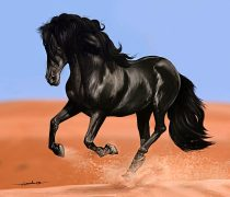 Wallpaper HD de un Impresionante Wallpaper de un Caballo Negro