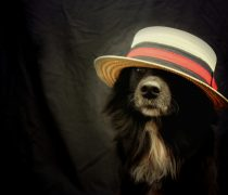 Wallpaper divertido Perro con sombrero